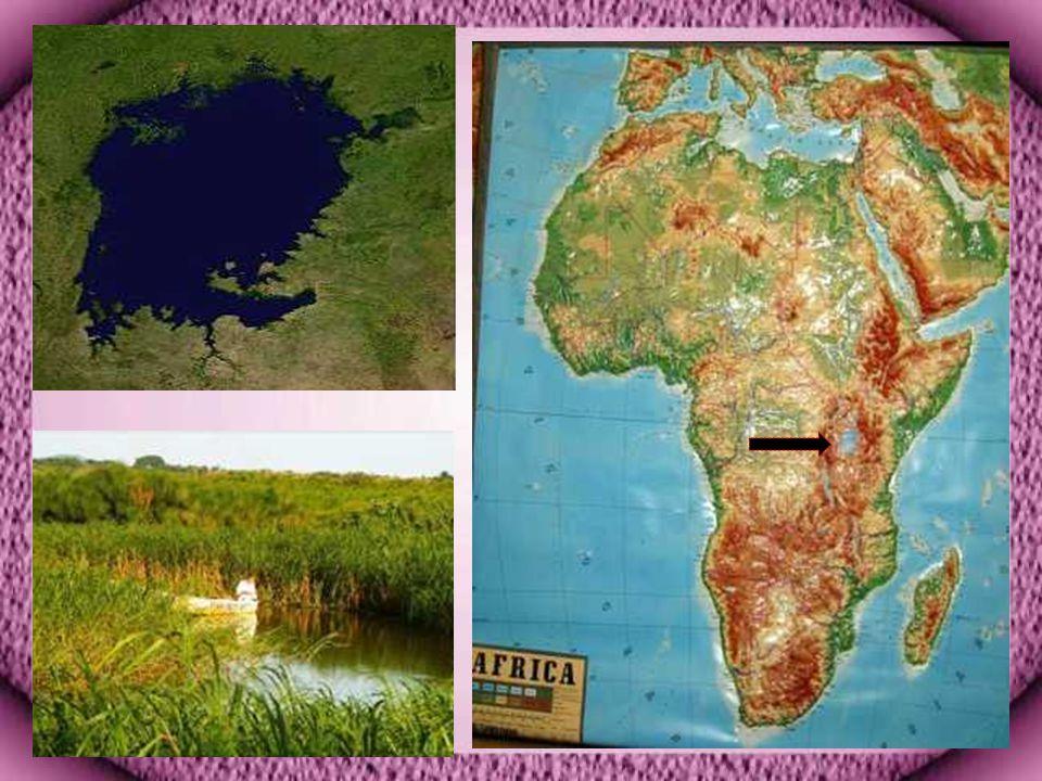 Viktorya Gölü Afrika nın doğusunda Tanzanya, Uganda ve Kenya topraklarında bulunan Dünya nın en büyük ikinci tatlı su gölüdür.