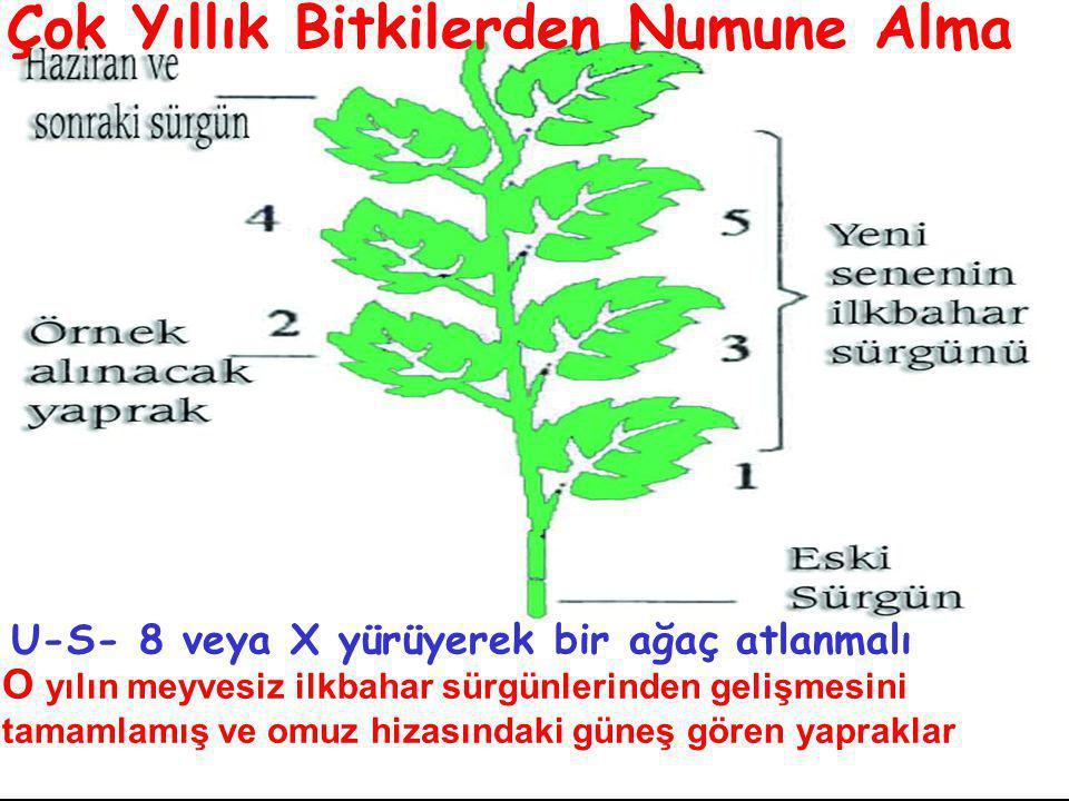 Çok Yıllık Bitkilerden Numune Alma