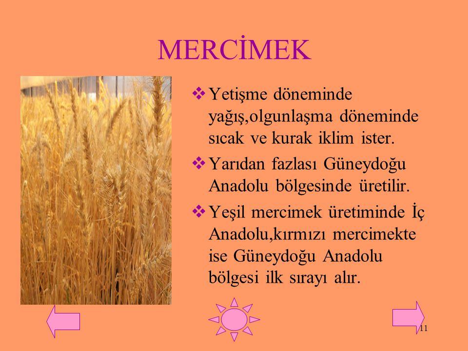 MERCİMEK Yetişme döneminde yağış,olgunlaşma döneminde sıcak ve kurak iklim ister. Yarıdan fazlası Güneydoğu Anadolu bölgesinde üretilir.