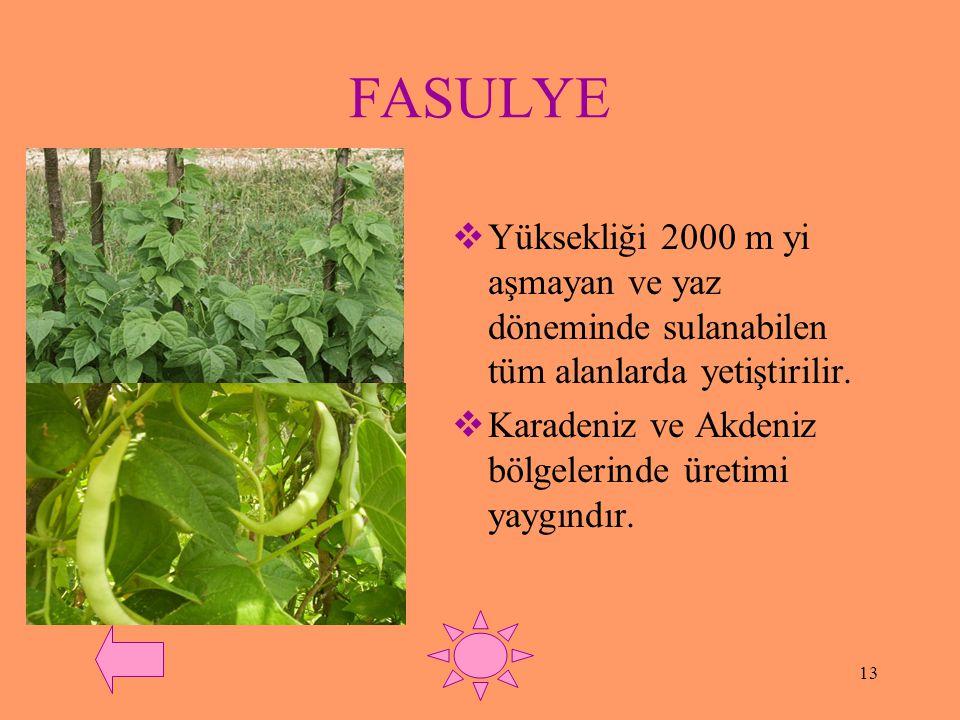 FASULYE Yüksekliği 2000 m yi aşmayan ve yaz döneminde sulanabilen tüm alanlarda yetiştirilir.