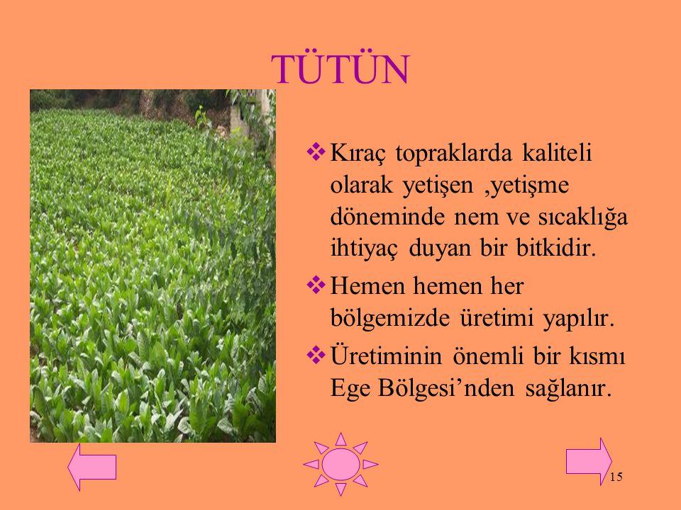 TÜTÜN Kıraç topraklarda kaliteli olarak yetişen ,yetişme döneminde nem ve sıcaklığa ihtiyaç duyan bir bitkidir.