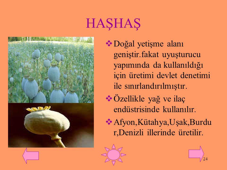 HAŞHAŞ Doğal yetişme alanı geniştir.fakat uyuşturucu yapımında da kullanıldığı için üretimi devlet denetimi ile sınırlandırılmıştır.
