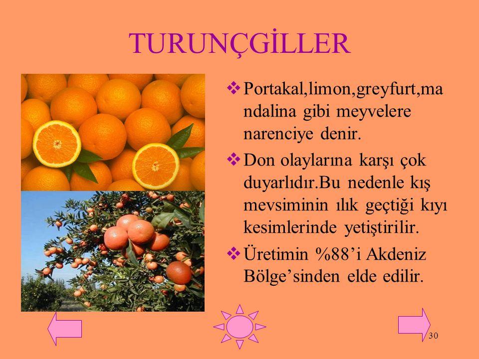 TURUNÇGİLLER Portakal,limon,greyfurt,mandalina gibi meyvelere narenciye denir.
