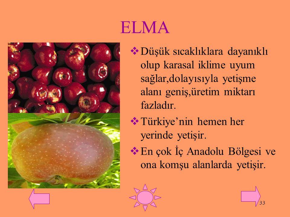 ELMA Düşük sıcaklıklara dayanıklı olup karasal iklime uyum sağlar,dolayısıyla yetişme alanı geniş,üretim miktarı fazladır.