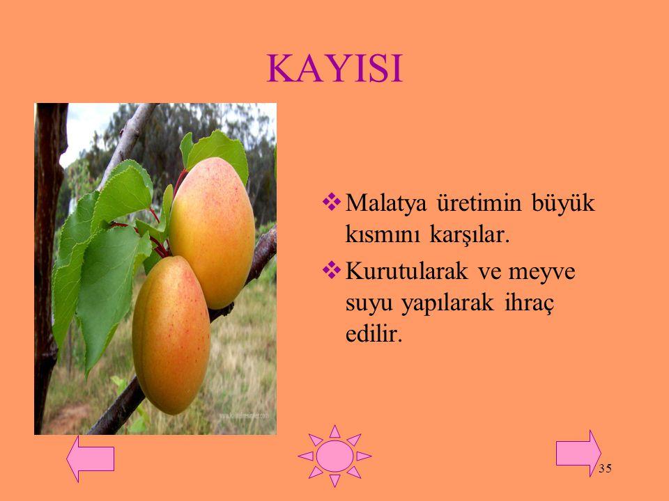 KAYISI Malatya üretimin büyük kısmını karşılar.