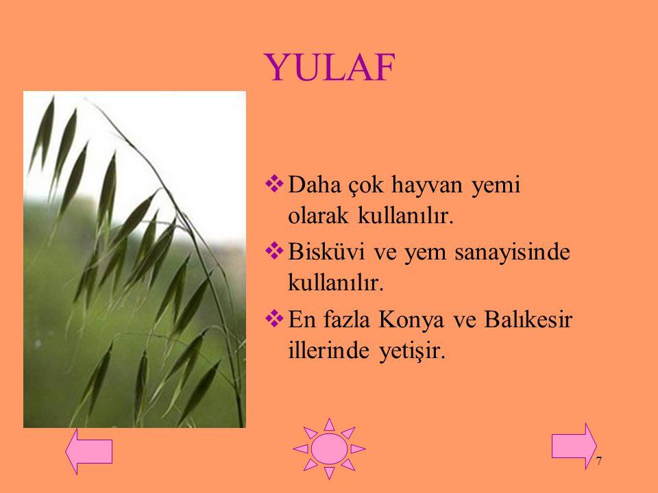 YULAF Daha çok hayvan yemi olarak kullanılır.