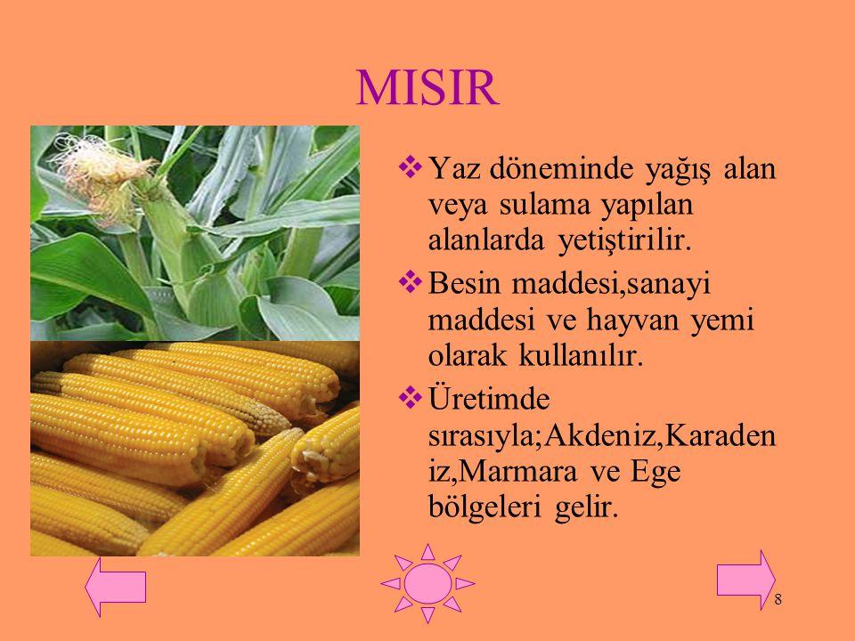 MISIR Yaz döneminde yağış alan veya sulama yapılan alanlarda yetiştirilir. Besin maddesi,sanayi maddesi ve hayvan yemi olarak kullanılır.