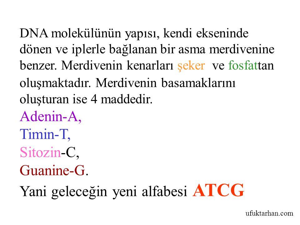 Yani geleceğin yeni alfabesi ATCG
