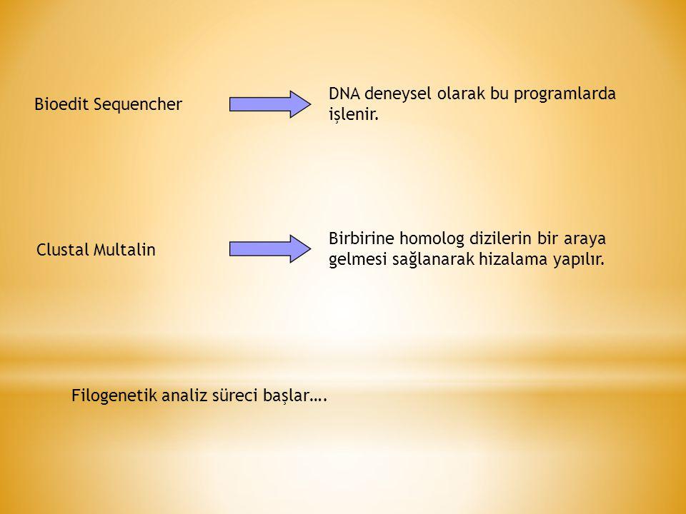DNA deneysel olarak bu programlarda işlenir.