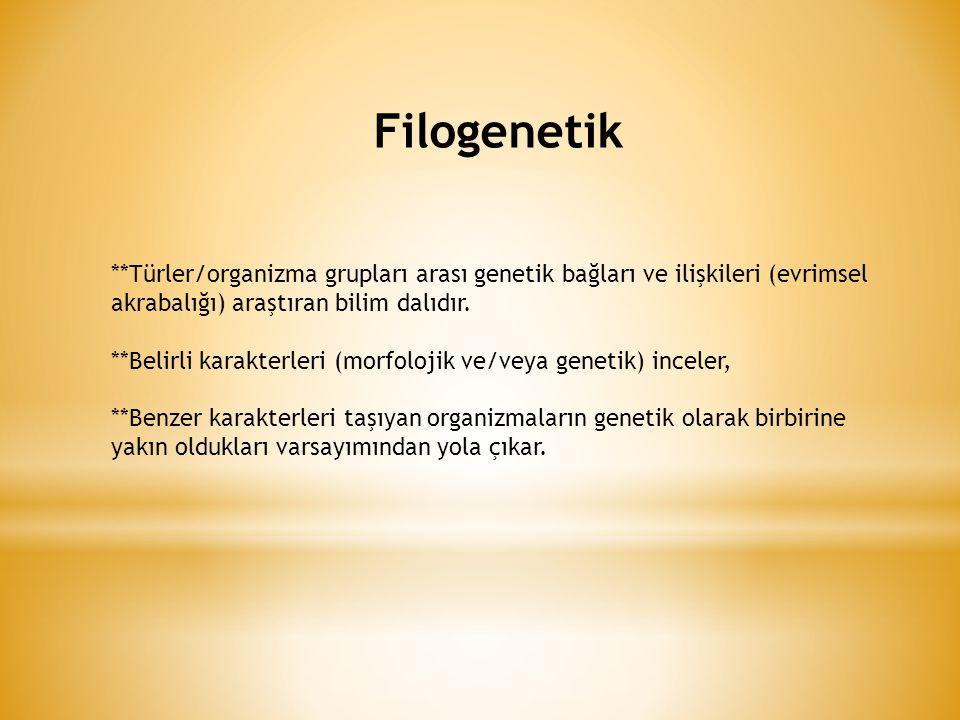 Filogenetik **Türler/organizma grupları arası genetik bağları ve ilişkileri (evrimsel akrabalığı) araştıran bilim dalıdır.