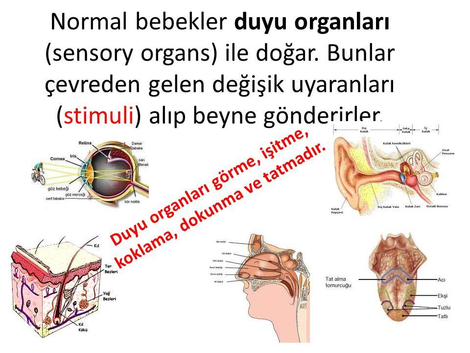 Duyu organları görme, işitme, koklama, dokunma ve tatmadır.