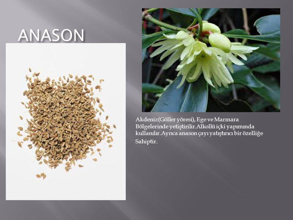 ANASON Akdeniz(Göller yöresi), Ege ve Marmara Bölgelerinde yetiştirilir.Alkollü içki yapımında kullanılır.Ayrıca anason çayı yatıştırıcı bir özelliğe.