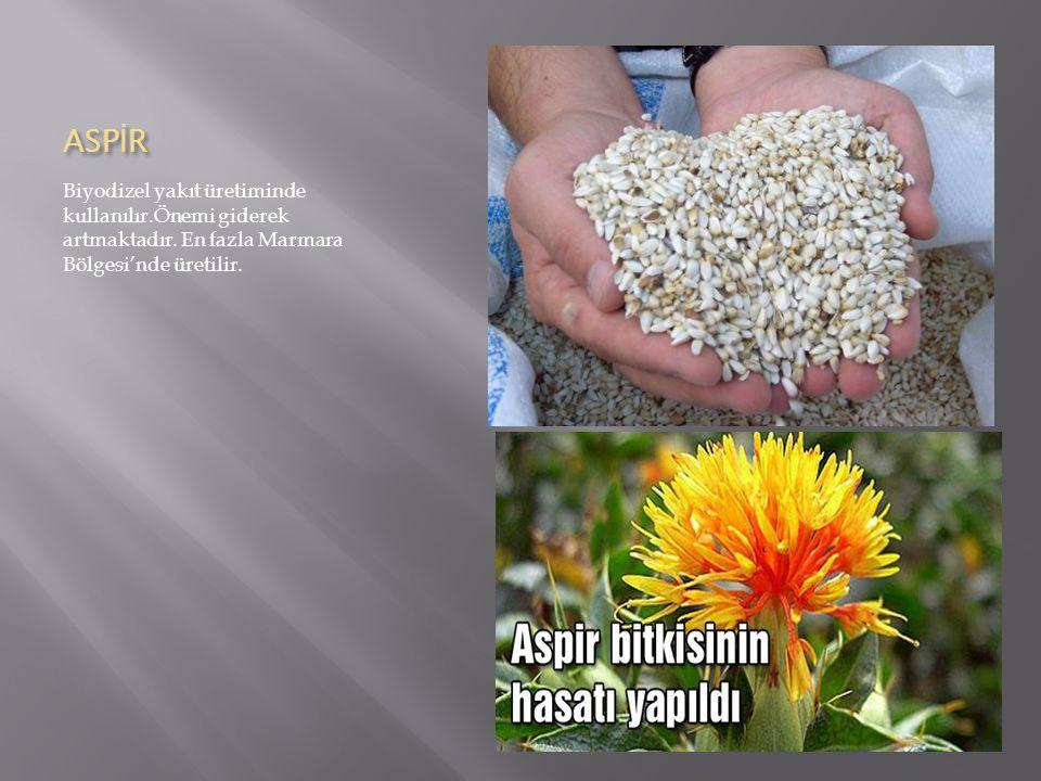 ASPİR Biyodizel yakıt üretiminde kullanılır.Önemi giderek artmaktadır.