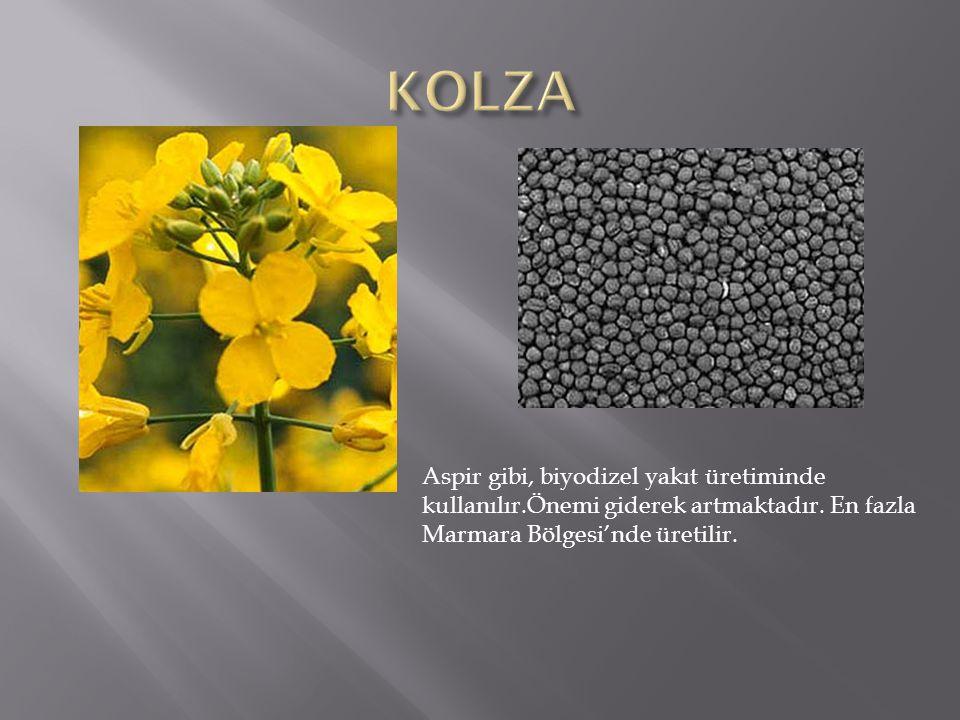 KOLZA Aspir gibi, biyodizel yakıt üretiminde kullanılır.Önemi giderek artmaktadır.