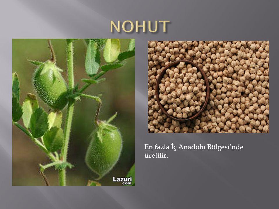 NOHUT En fazla İç Anadolu Bölgesi'nde üretilir.