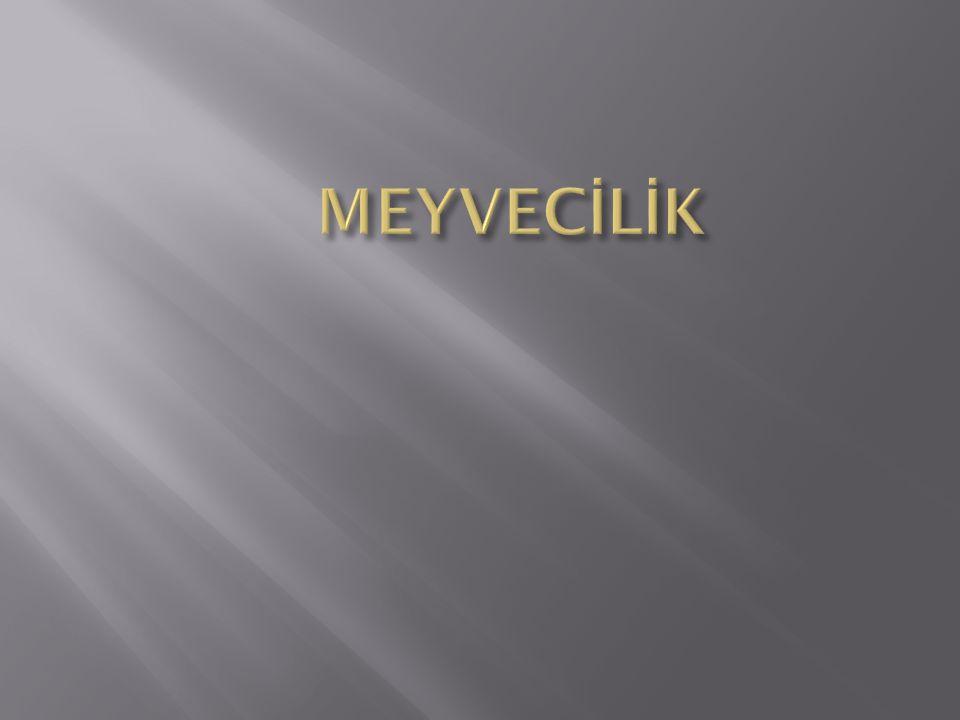 MEYVECİLİK