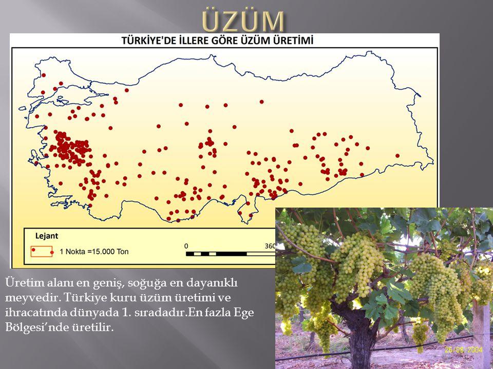 ÜZÜM Üretim alanı en geniş, soğuğa en dayanıklı meyvedir. Türkiye kuru üzüm üretimi ve ihracatında dünyada 1. sıradadır.En fazla Ege.