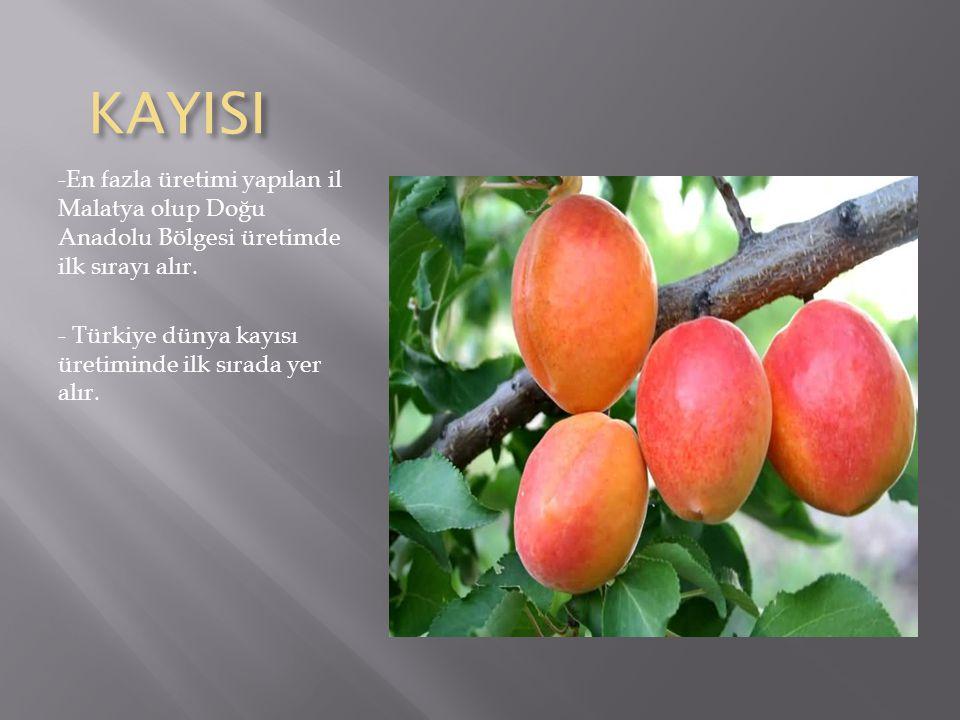 KAYISI -En fazla üretimi yapılan il Malatya olup Doğu Anadolu Bölgesi üretimde ilk sırayı alır.