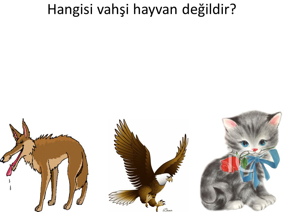 Hangisi vahşi hayvan değildir