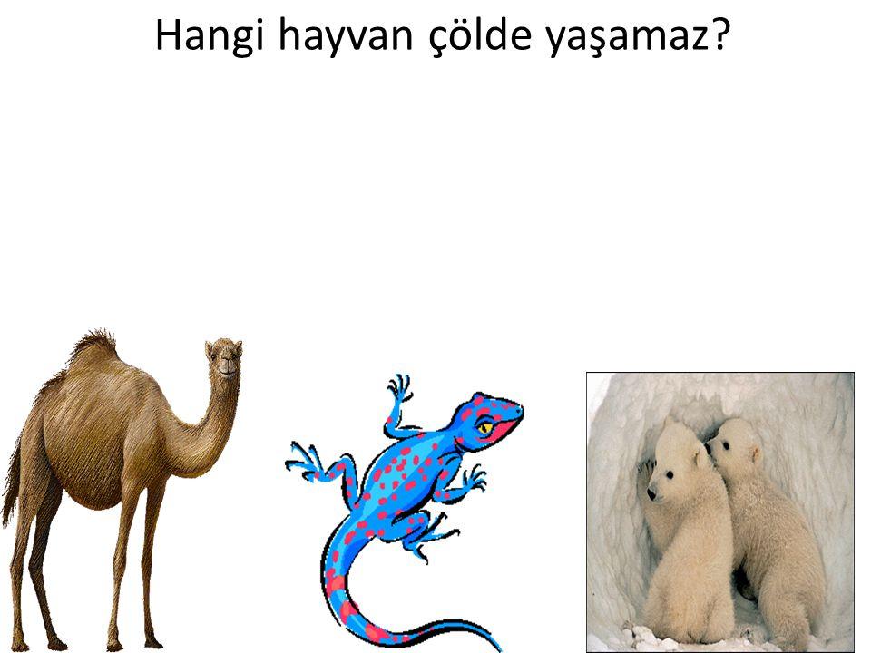 Hangi hayvan çölde yaşamaz
