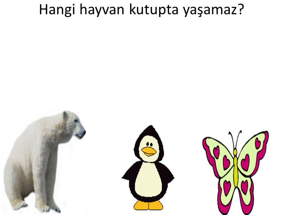 Hangi hayvan kutupta yaşamaz
