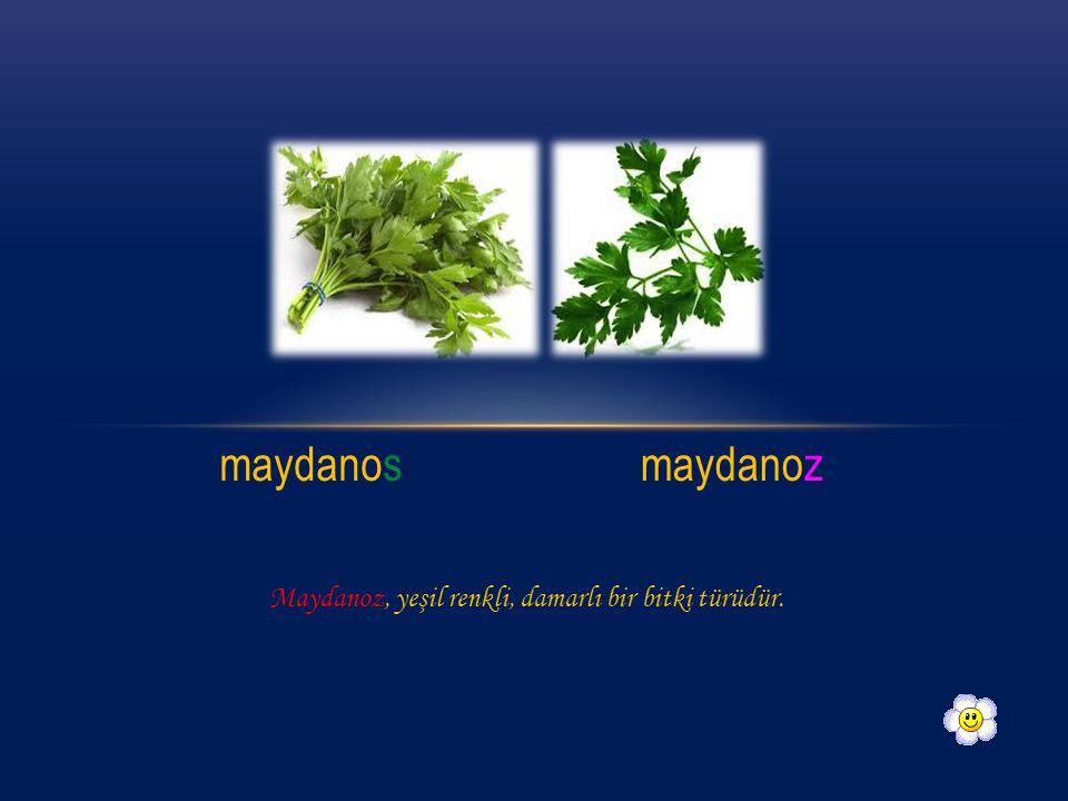 maydanos maydanoz Maydanoz, yeşil renkli, damarlı bir bitki türüdür.