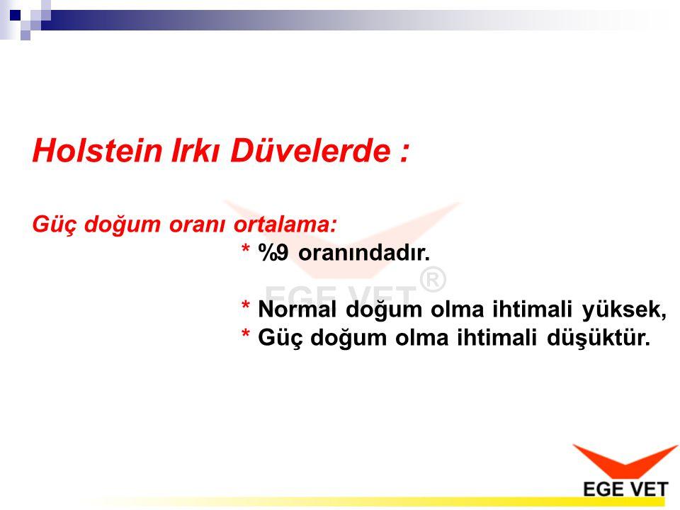 Holstein Irkı Düvelerde :