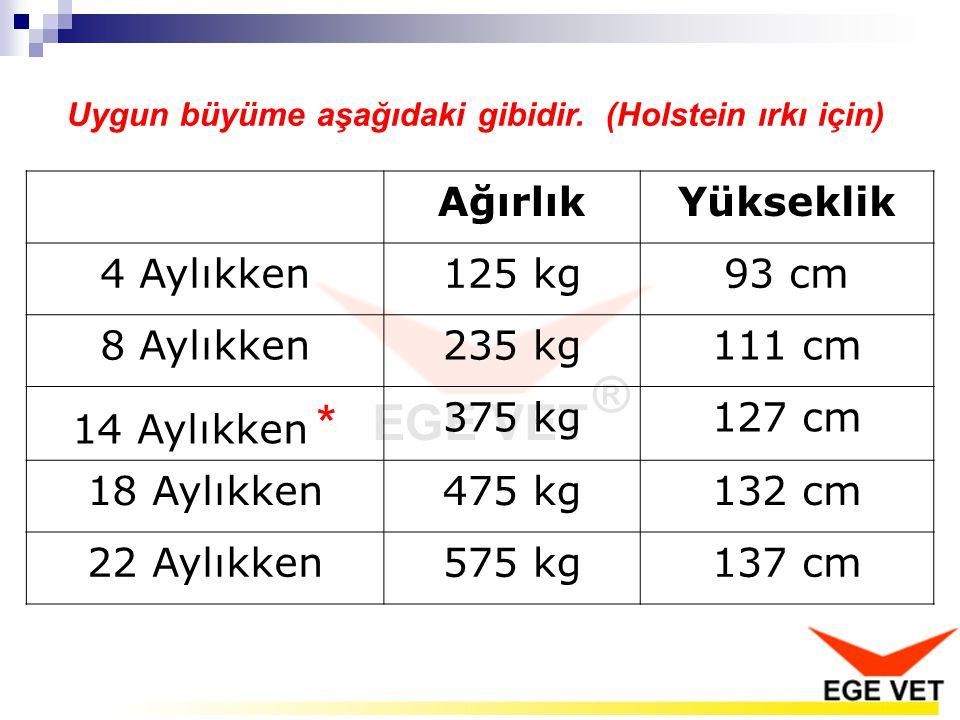 Ağırlık Yükseklik 4 Aylıkken 125 kg 93 cm 8 Aylıkken 235 kg 111 cm