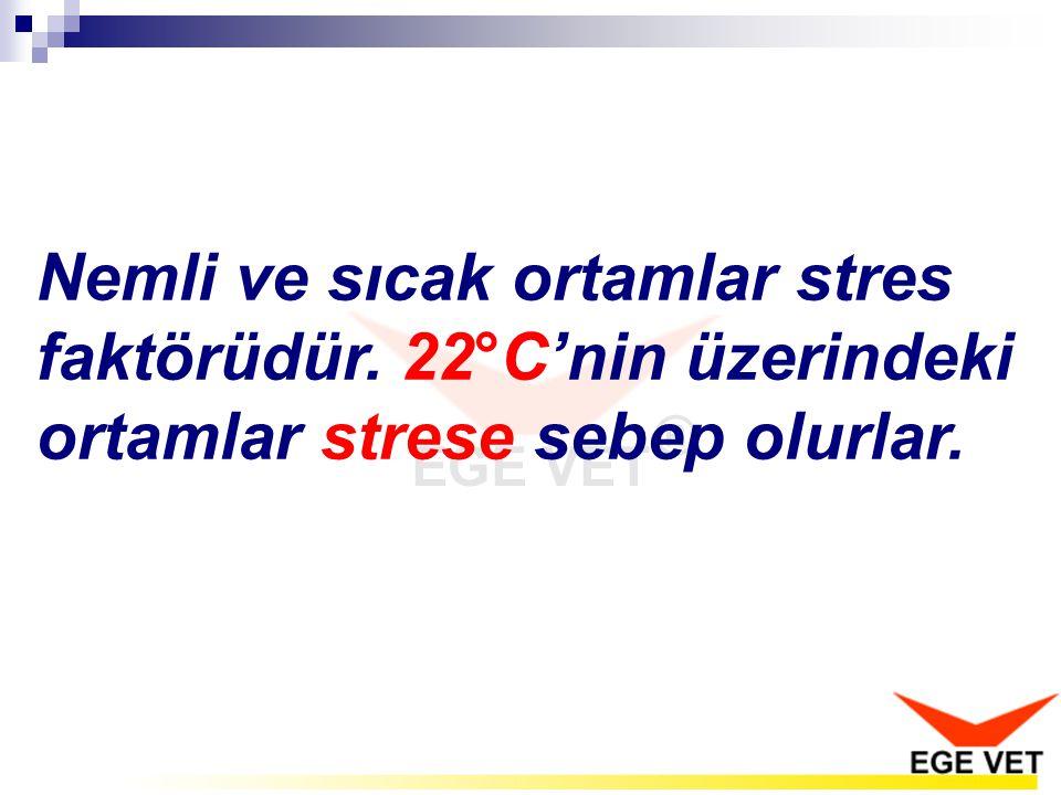 Nemli ve sıcak ortamlar stres faktörüdür