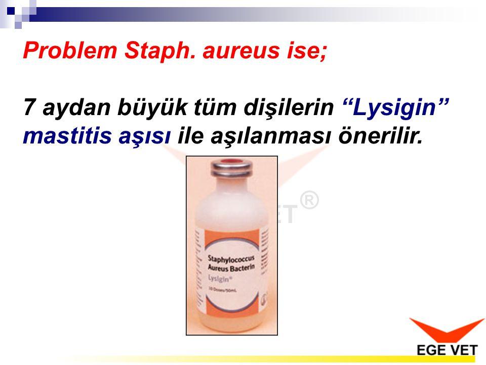 Problem Staph. aureus ise;