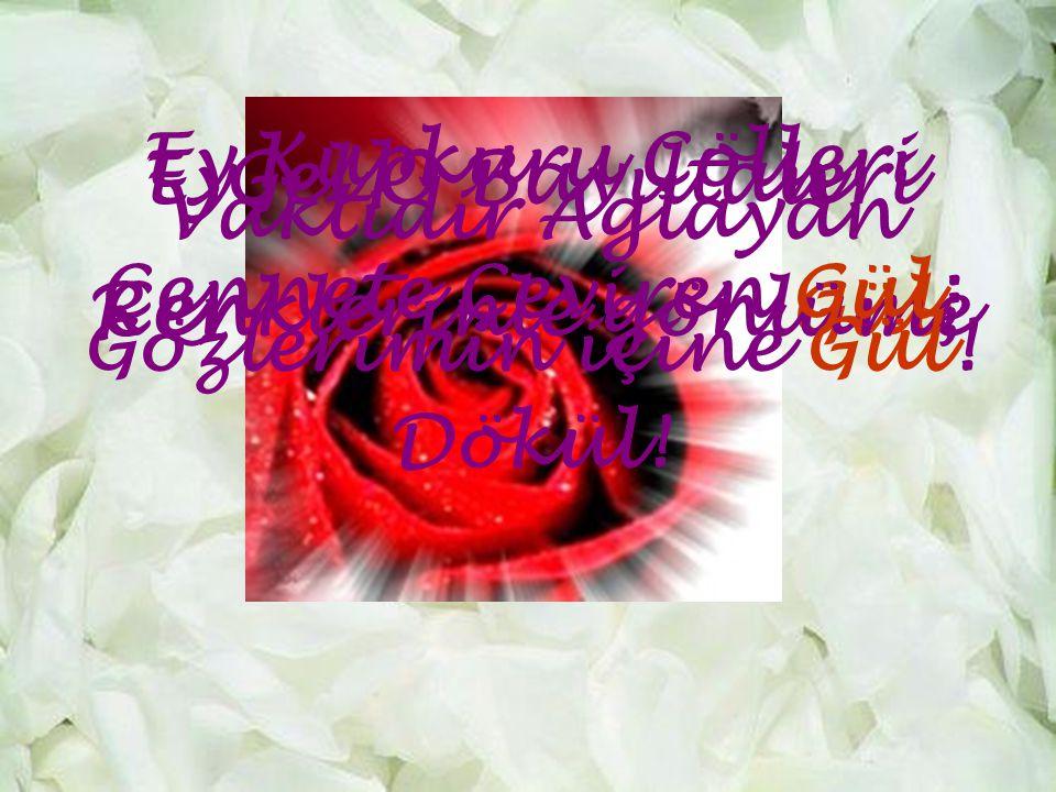 Ey Kupkuru Çölleri Cennete Çeviren Gül; Gel O Bayıltan. Renklerinle gönlüme. Dökül! Vaktidir Aglayan.