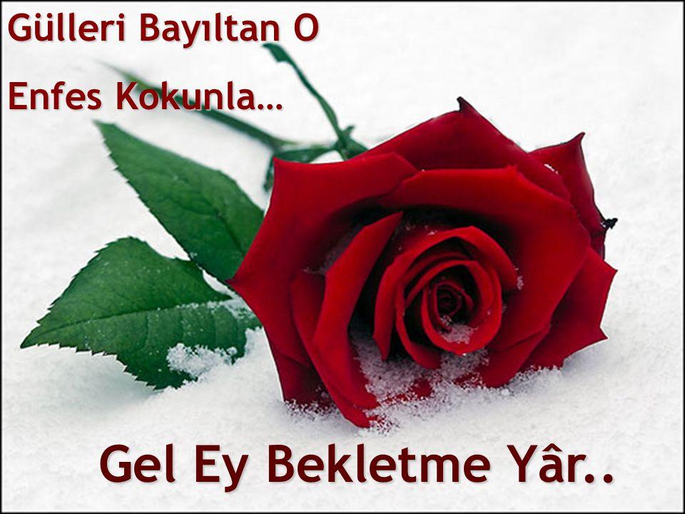 Gülleri Bayıltan O Enfes Kokunla… Gel Ey Bekletme Yâr..