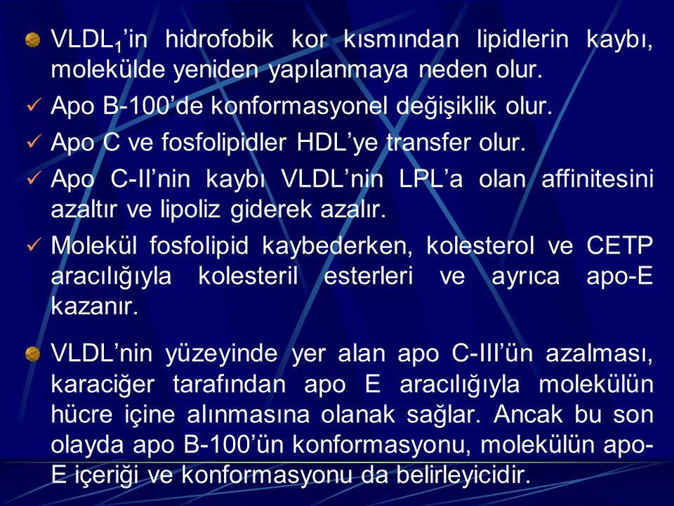 VLDL1'in hidrofobik kor kısmından lipidlerin kaybı, molekülde yeniden yapılanmaya neden olur.