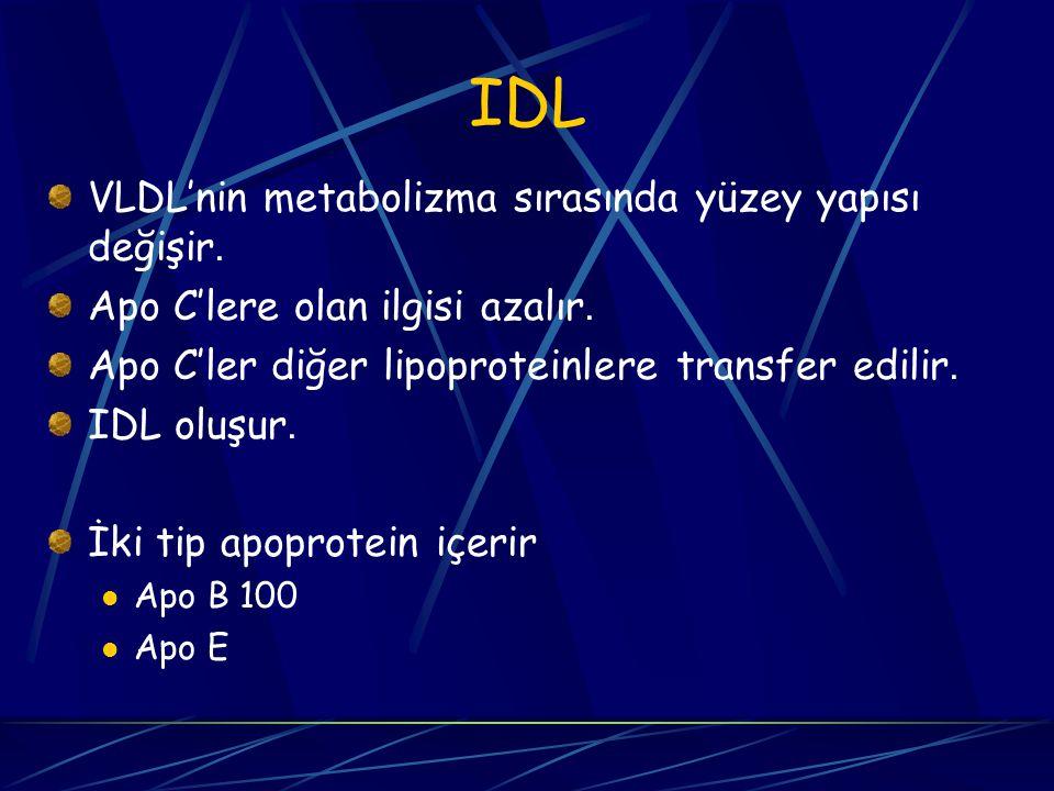 IDL VLDL'nin metabolizma sırasında yüzey yapısı değişir.