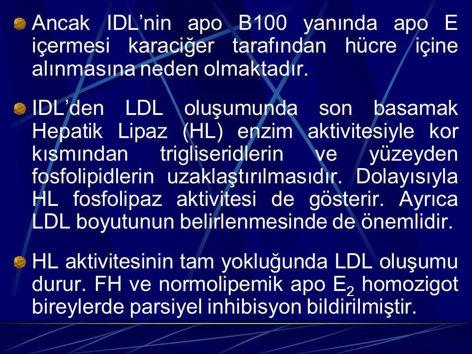 Ancak IDL'nin apo B100 yanında apo E içermesi karaciğer tarafından hücre içine alınmasına neden olmaktadır.