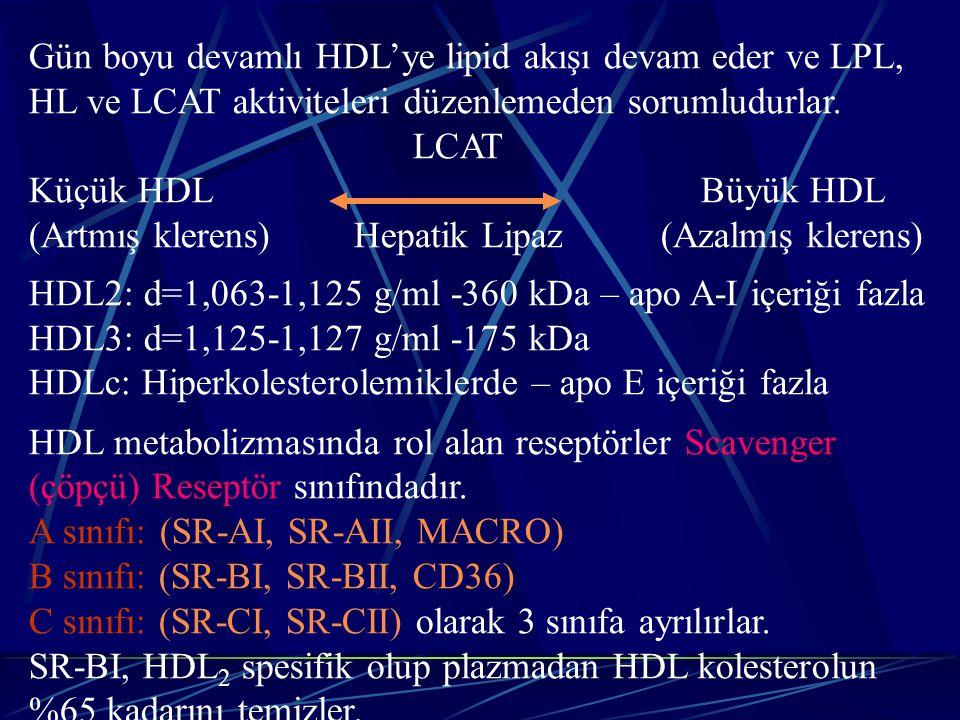 Gün boyu devamlı HDL'ye lipid akışı devam eder ve LPL, HL ve LCAT aktiviteleri düzenlemeden sorumludurlar.
