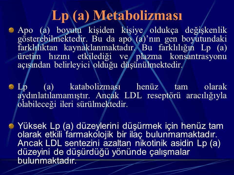 Lp (a) Metabolizması