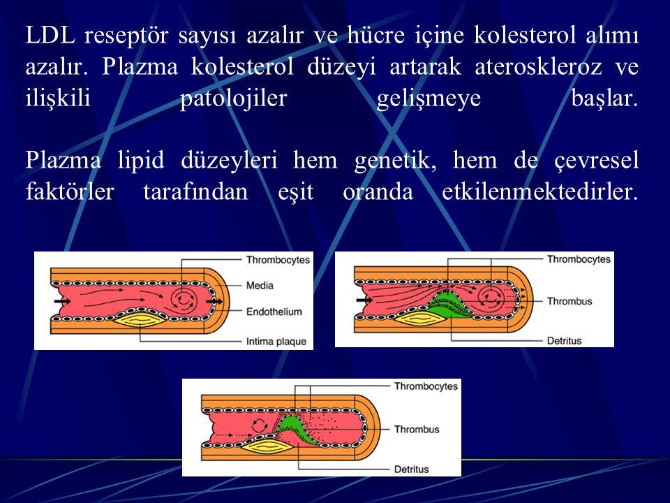 LDL reseptör sayısı azalır ve hücre içine kolesterol alımı azalır