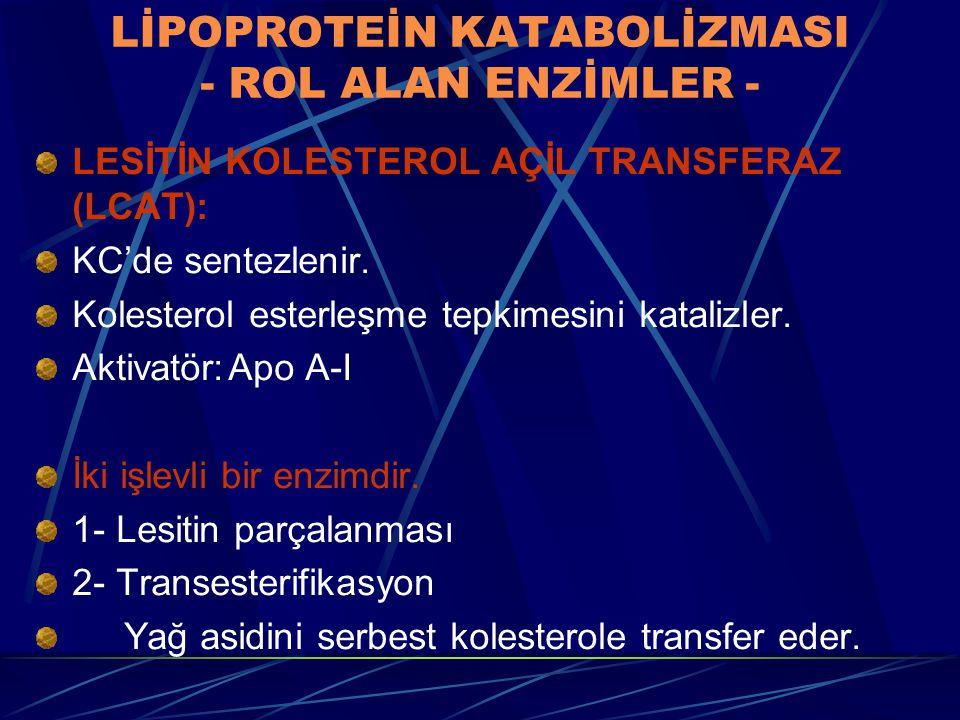 LİPOPROTEİN KATABOLİZMASI - ROL ALAN ENZİMLER -