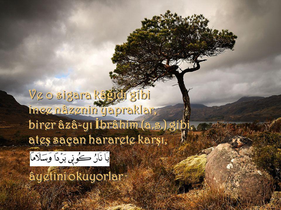 ince nâzenin yapraklar, birer âzâ-yı İbrâhim (a.s.) gibi,