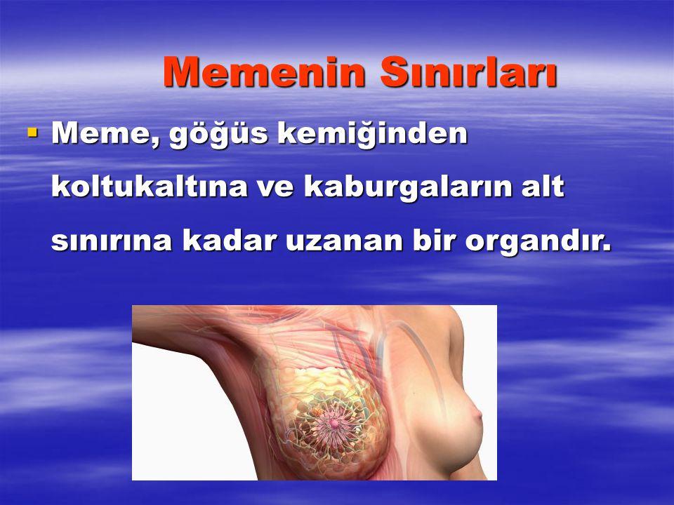 Memenin Sınırları Meme, göğüs kemiğinden koltukaltına ve kaburgaların alt sınırına kadar uzanan bir organdır.