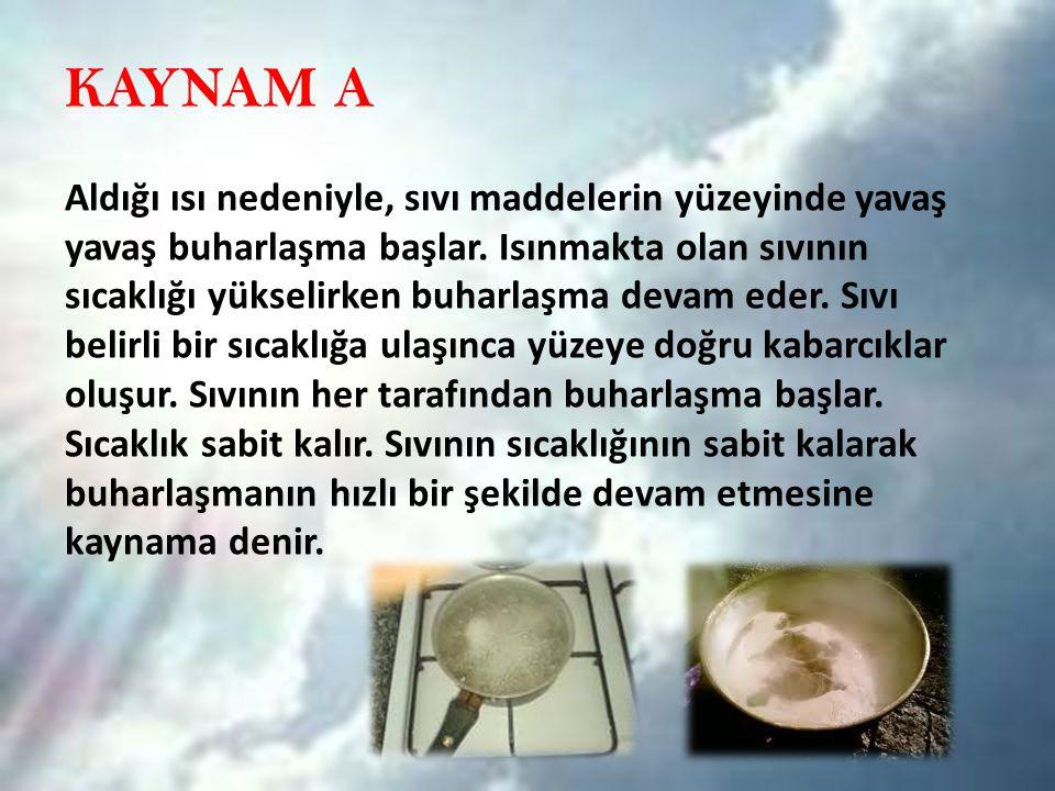 KAYNAM A
