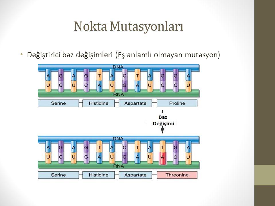 Nokta Mutasyonları Değiştirici baz değişimleri (Eş anlamlı olmayan mutasyon)