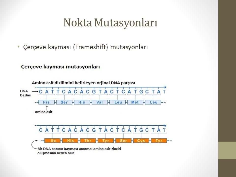 Nokta Mutasyonları Çerçeve kayması (Frameshift) mutasyonları
