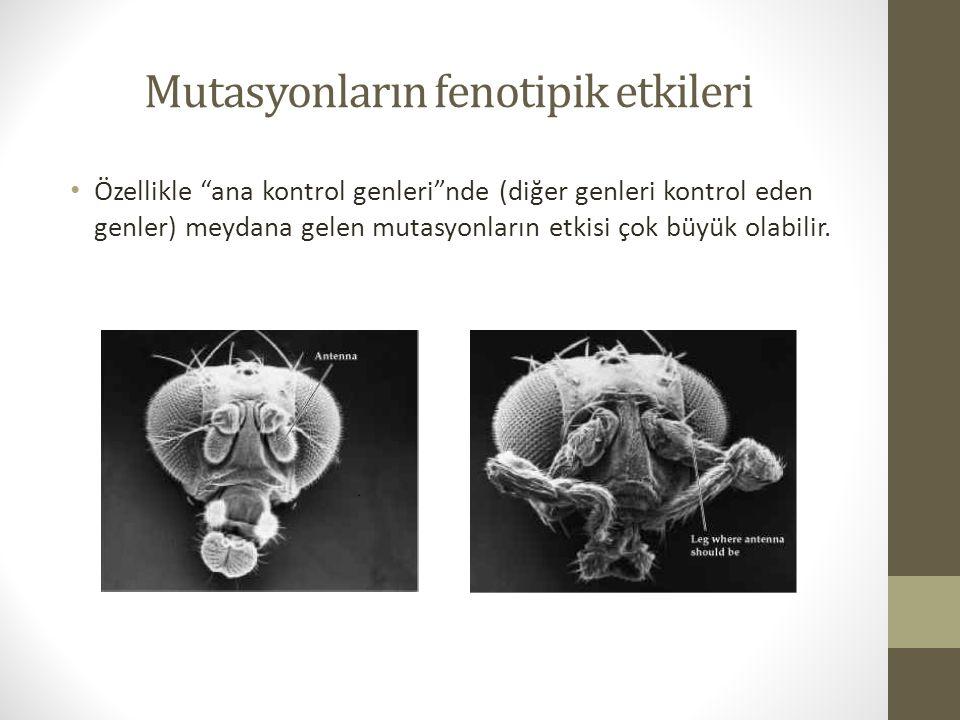 Mutasyonların fenotipik etkileri