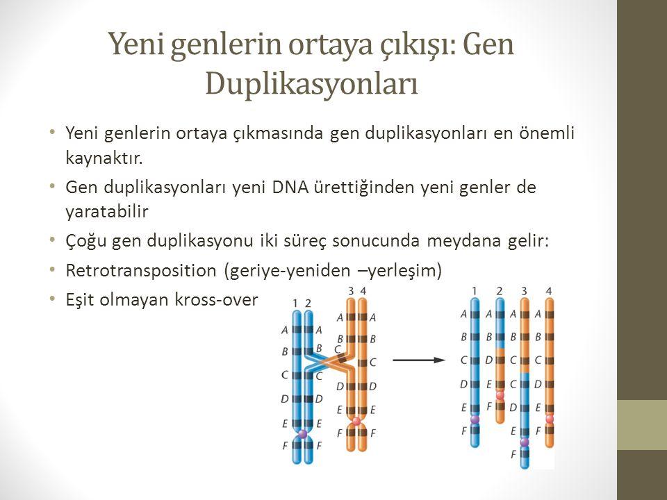 Yeni genlerin ortaya çıkışı: Gen Duplikasyonları