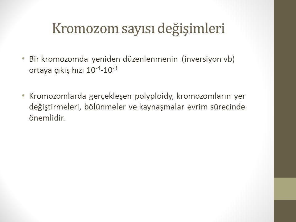 Kromozom sayısı değişimleri