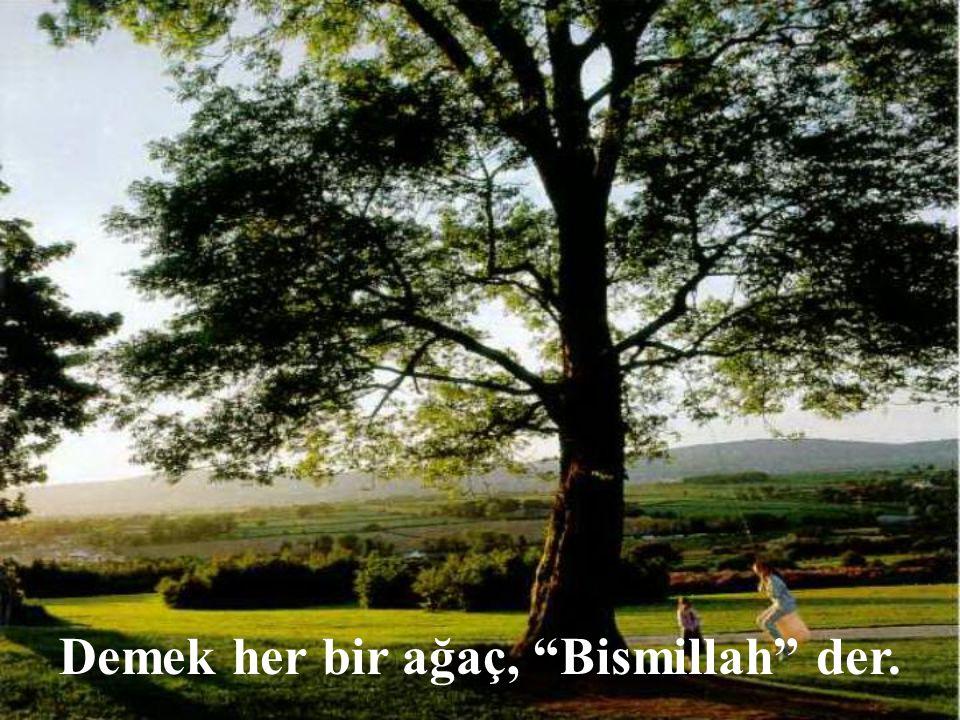 Demek her bir ağaç, Bismillah der.