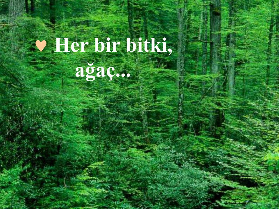  Her bir bitki, ağaç...