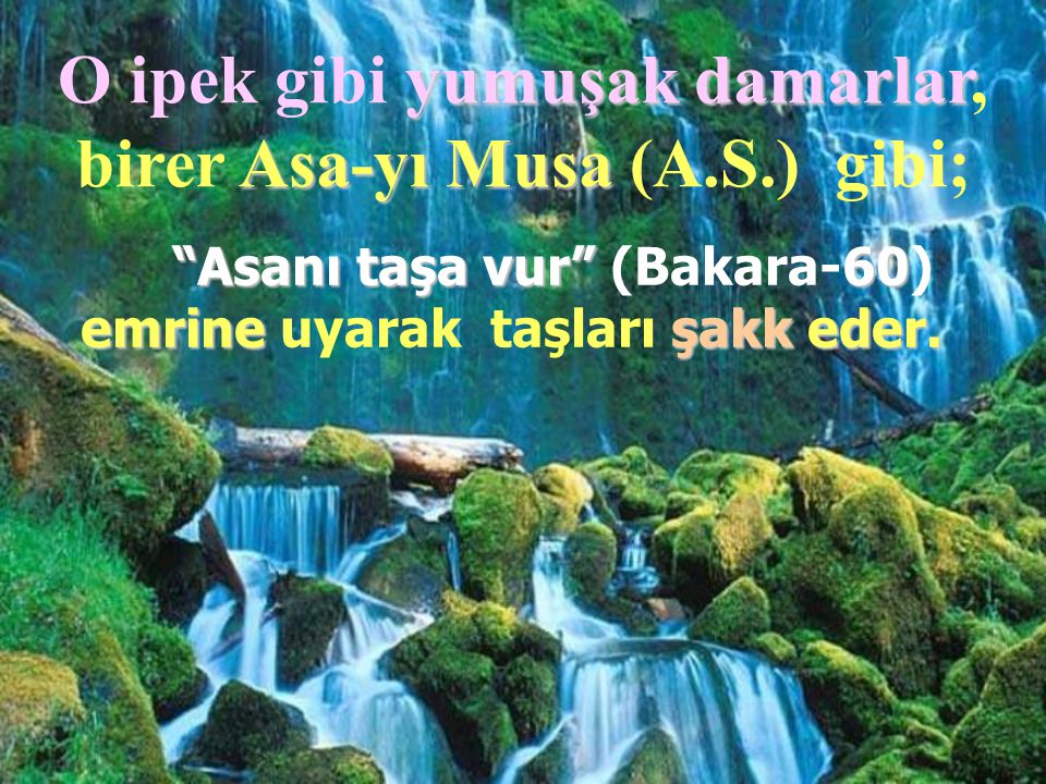 O ipek gibi yumuşak damarlar, birer Asa-yı Musa (A.S.) gibi;